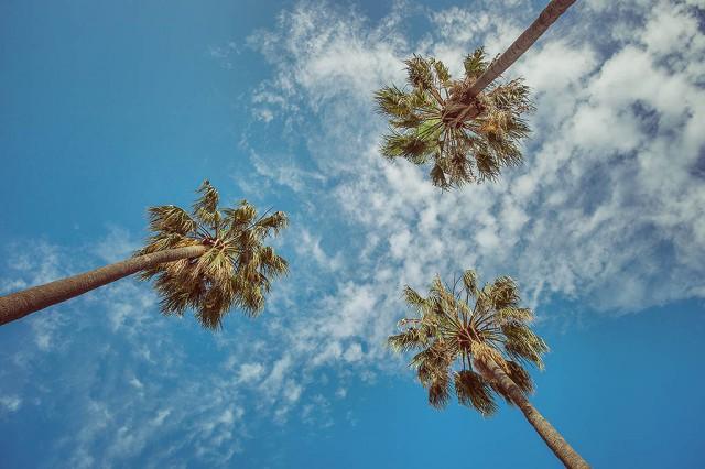 Takové jakoby palmy